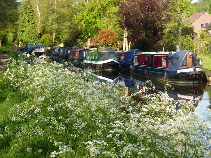 Canal boats on the River Wey Surrey lr